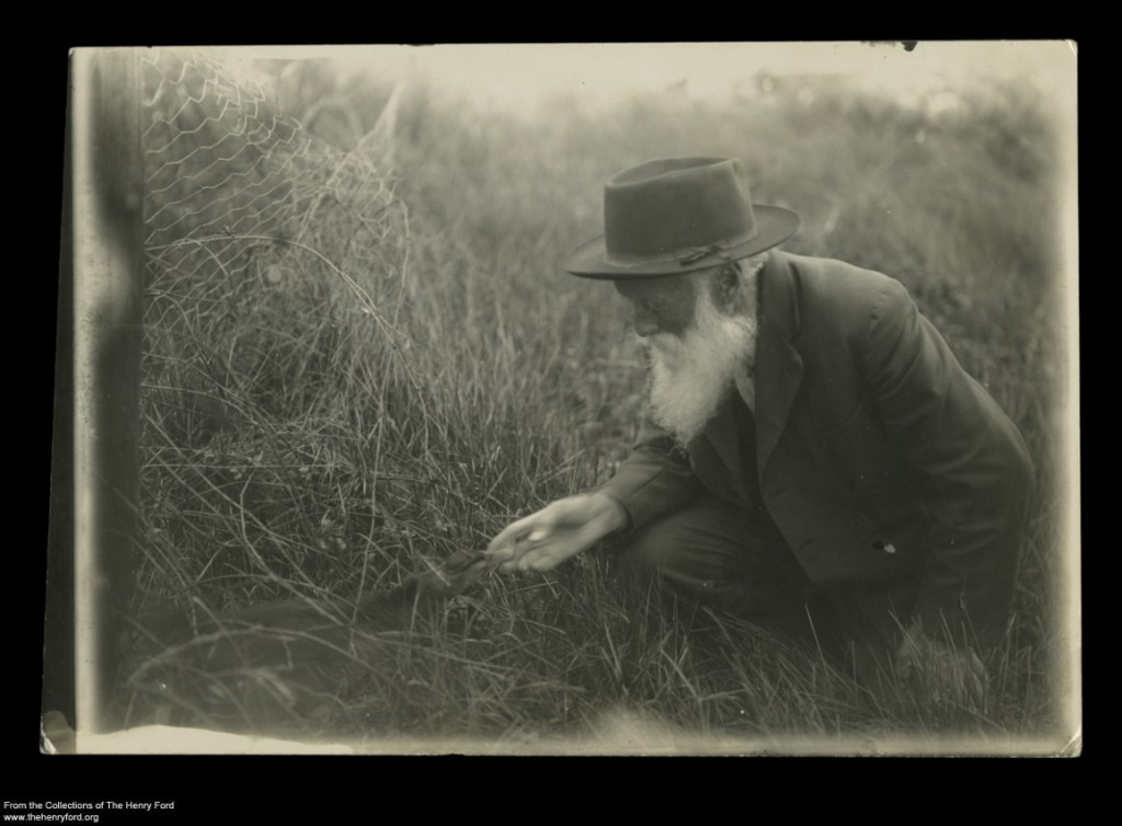 Naturalist John Burroughs with a Duck on her Nest, circa 1910