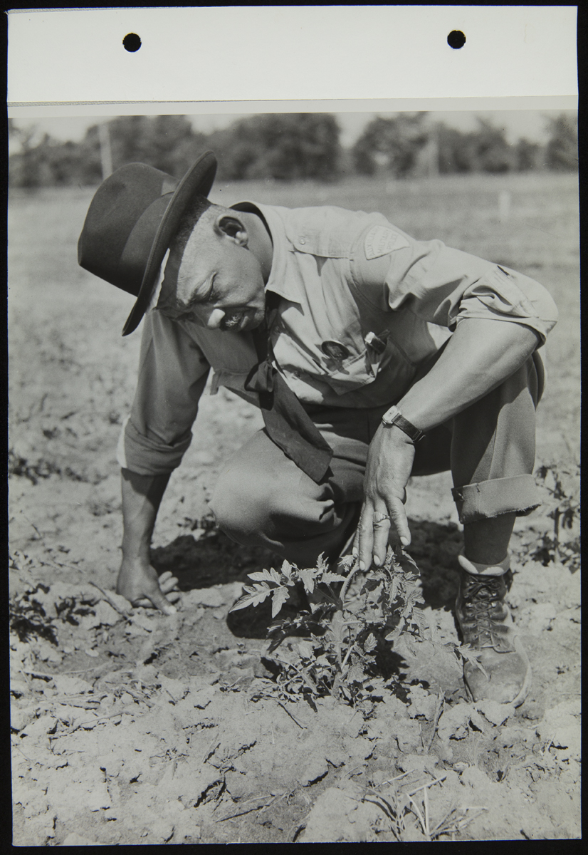 African American man squatting by plant in field