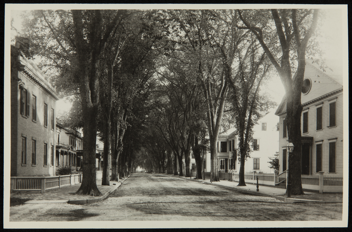 Black-and-white photo of tree-lined road with houses with low fences along both sides