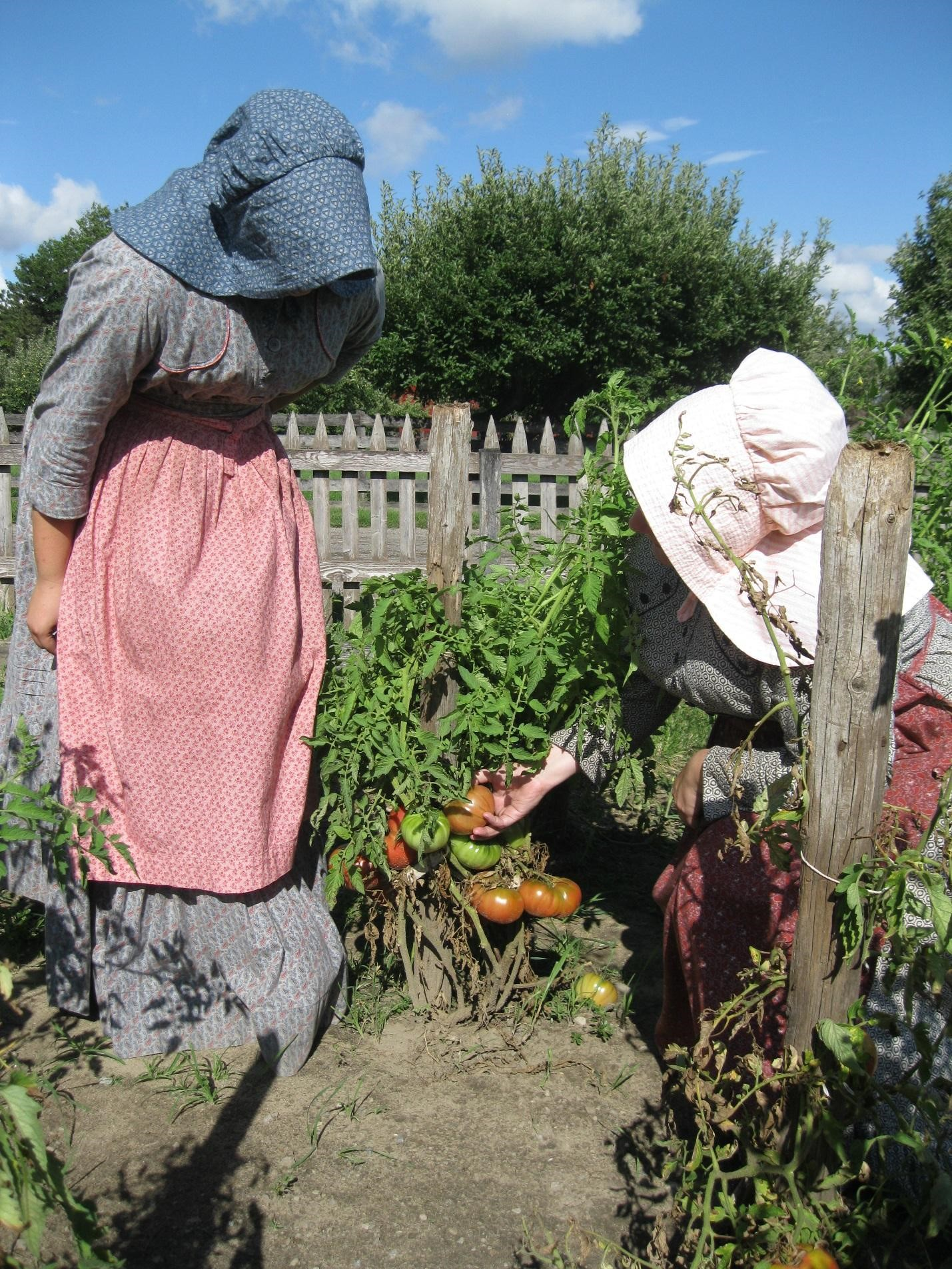 Two women in period dresses and bonnets examine a tomato plant in a garden with unpainted picket fence in background